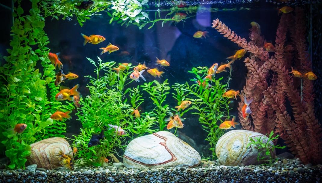 Puliti & Felici - Pulire l'acquario