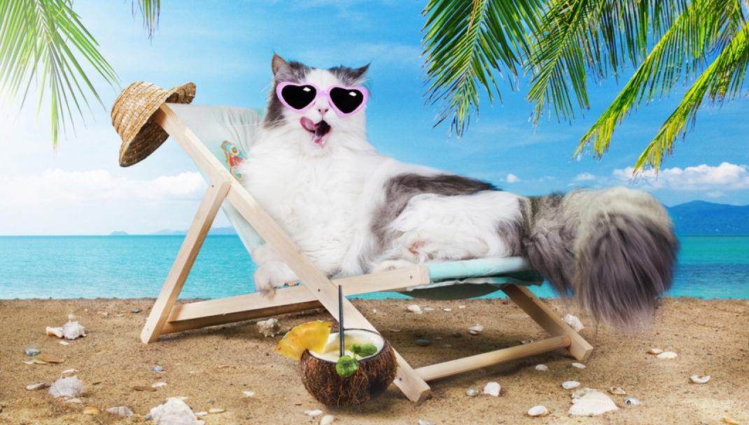Puliti&Felici - Lettiera: il gatto la preferisce pulita